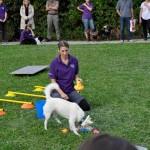 HSV Maissau erstmals auch mit Trickdogging