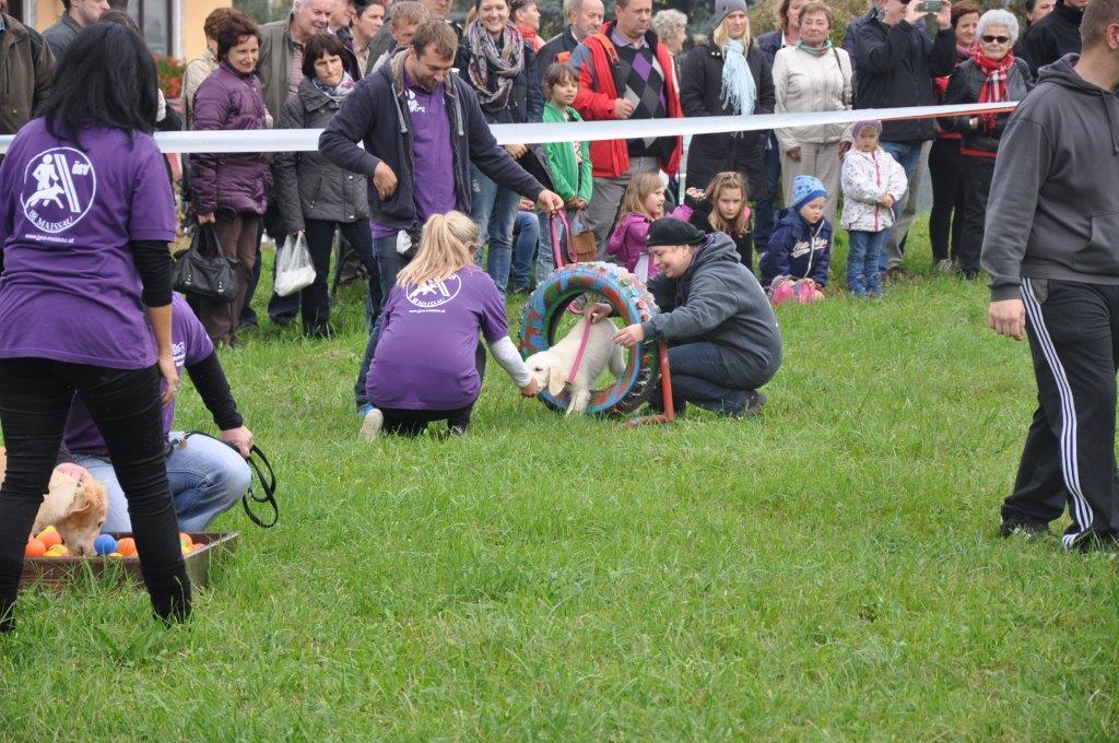 Erdaepfelfest Geras 2014 (c) Harry (440)